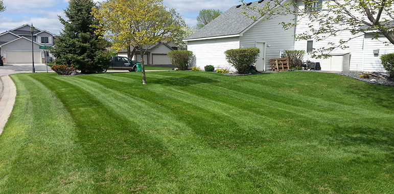 Spring Is Blooming Start Your Lawn Care Off Right Cb