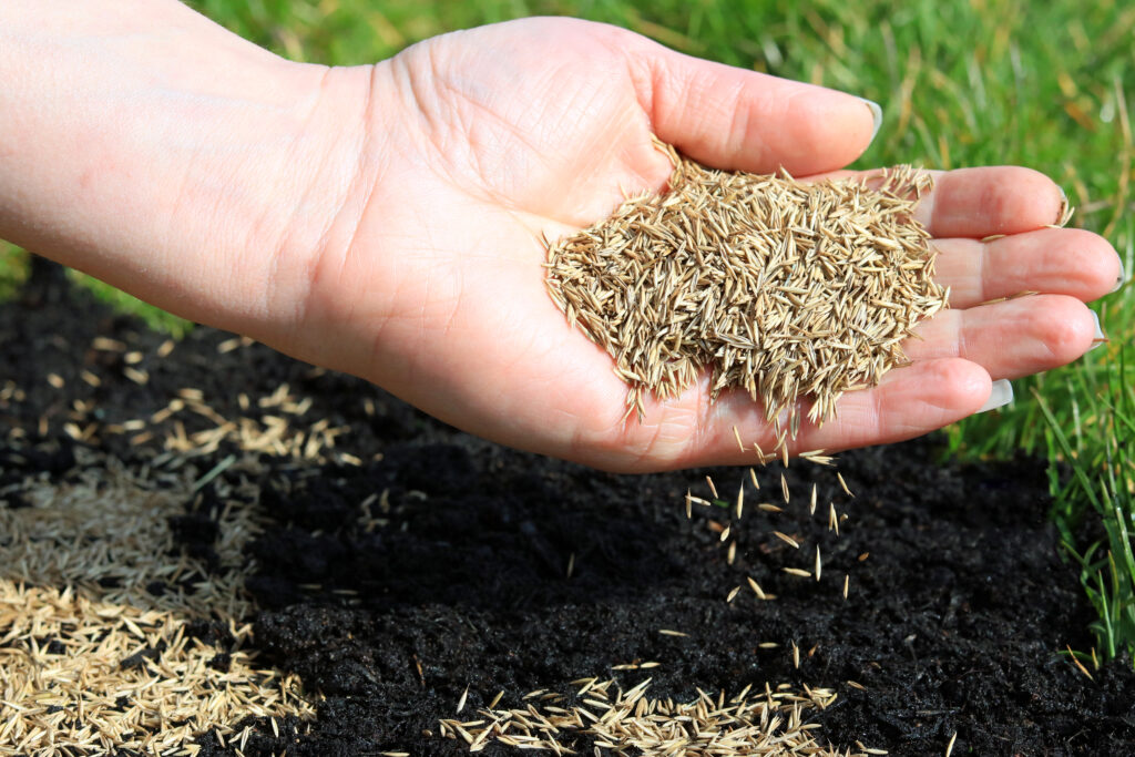 grass seed mistakes