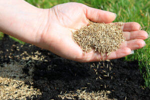 Grass Seed Mistakes – 5 to Avoid