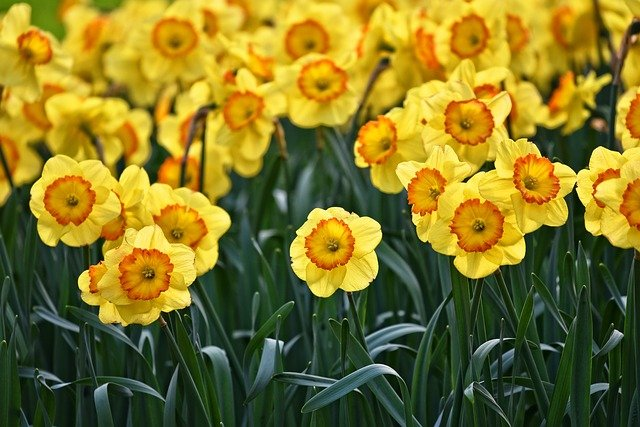 Fall Bulb Planting – 10 Types